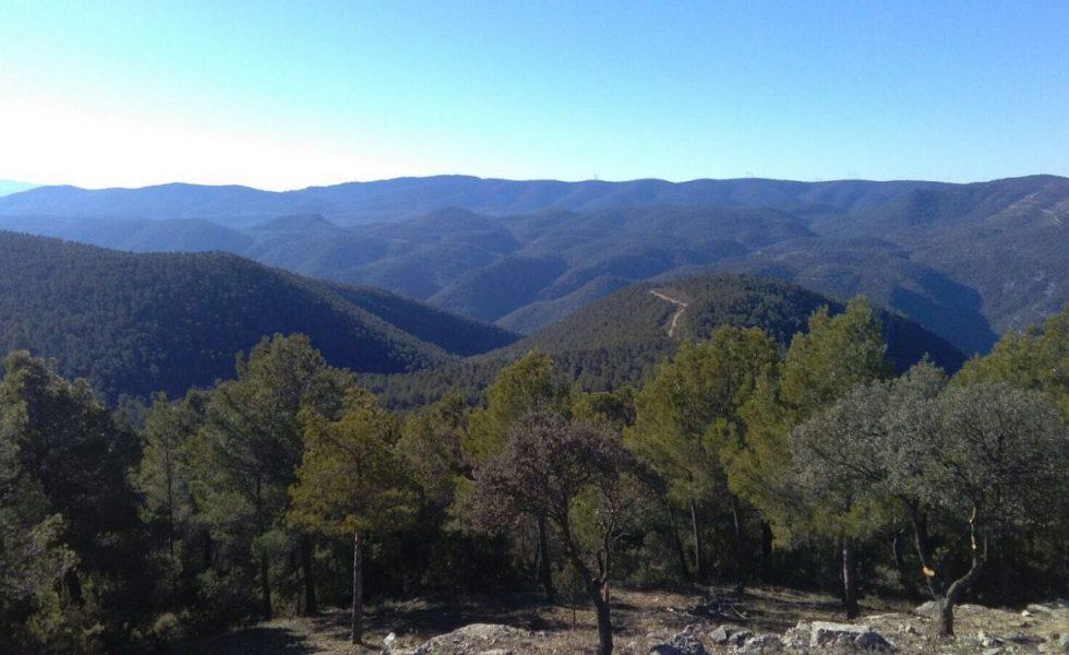 Diseñar y aplicar medidas de estímulo a la gestión forestal para evitar el abandono del 55% de nuestro territorio